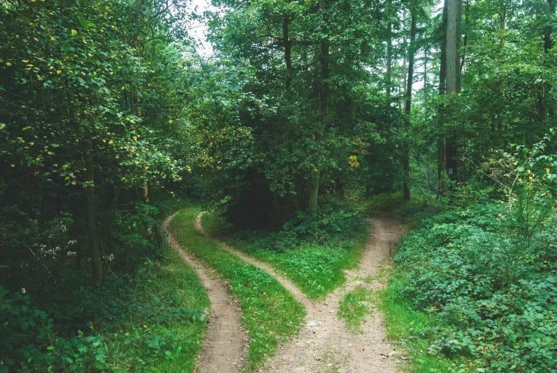 forest crossroads-401k loan vs 401k withdrawal
